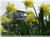 spring-2009.jpg